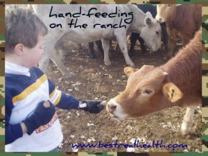 Protein-Fat-hand-feeding-on-the-ranch
